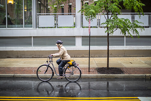 penn staff member biking to work